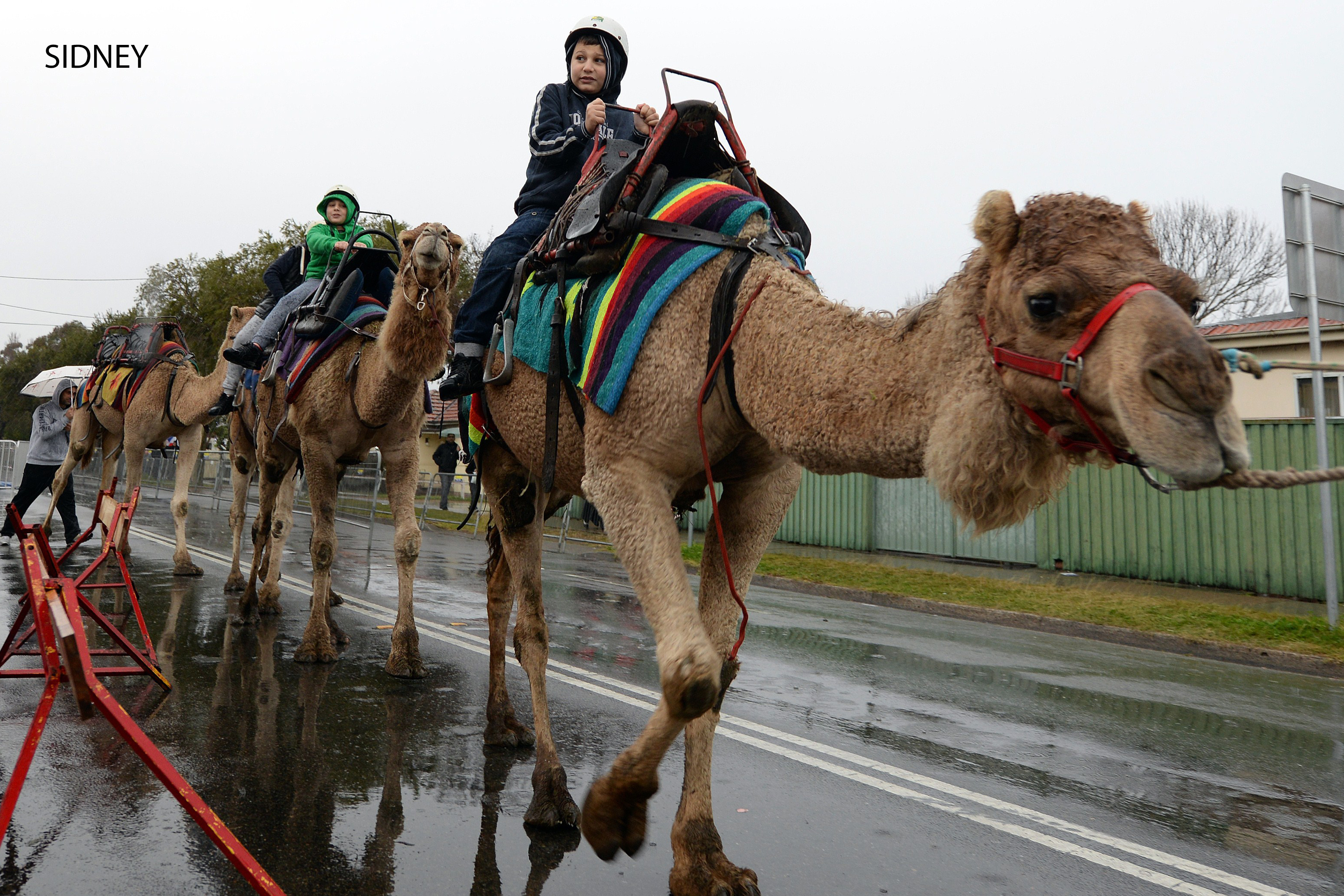 Children ride camels after a grand Eid al-Fitr prayer at the Lekamba mosque in western Sydney on July 17, 2015. Australian Muslims on July 17 celebrated their religious Eid al-Fitr festival at the end of the holy fasting month of Ramadan. AFP PHOTO / Saeed Khan (Photo credit should read SAEED KHAN/AFP/Getty Images)